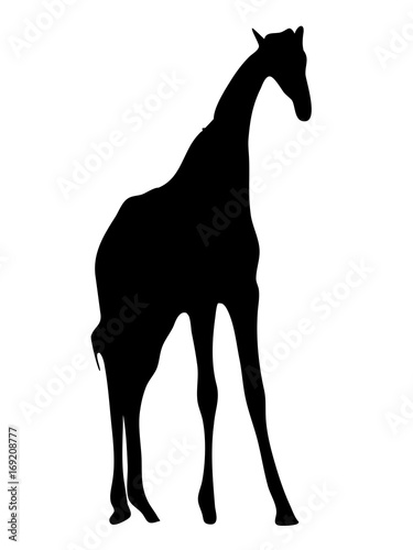 View on the silhouette of a giraffe - digitally hand drawn vector illustraion Poster