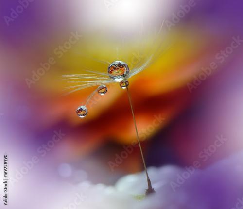 Fotobehang Macrofotografie Drops on Dandelion Flowers. Macro photography .Close-up Photo of Water Drops.Floral fantasy design.Amazing Background.