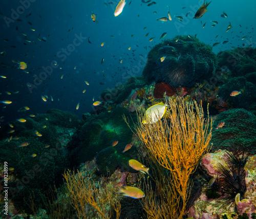Staande foto Koraalriffen Anemone