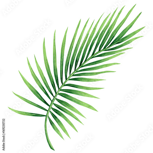 Watercolor painting coconut, palm leaf,green leaves isolated on white background.Watercolor hand painted illustration tropical exotic leaf for wallpaper vintage Hawaii style pattern.With clipping path Wall mural