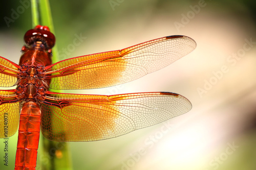 Photo  Flight of the Dragonfly