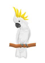 White Cockatoo Parrot On Branc...