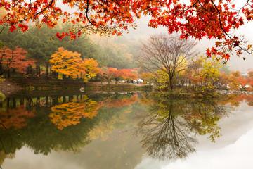 Panel Szklany Podświetlane Inspiracje na jesień 호수와 가을 풍경