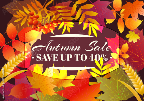 Fototapeta Autumn sale poster, flyer, card template with typography. Bright fall maple leaves, spica, rowanberry. Vector illustration. obraz na płótnie