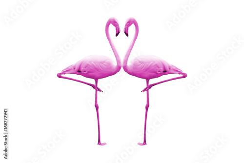 Foto op Aluminium Flamingo Pink flamingo isolated on white background