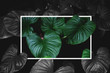 Tropical green leaves with creative square frame layout, contrast green and monochrome colors