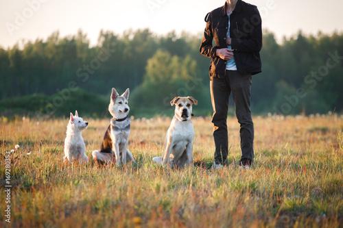 Three dogs sitting on the field, near owner Fototapeta