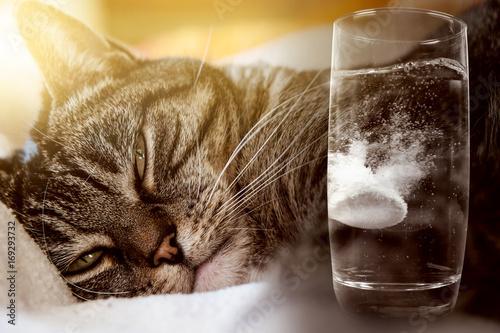 Fotografie, Obraz  The cat has a hangover