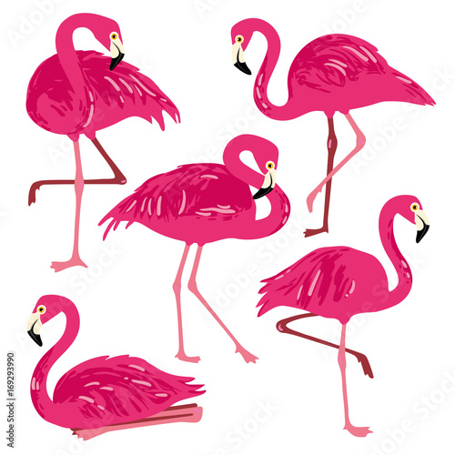 In de dag Flamingo vogel Vector set with pink flamingos. Hand Drawn illustration
