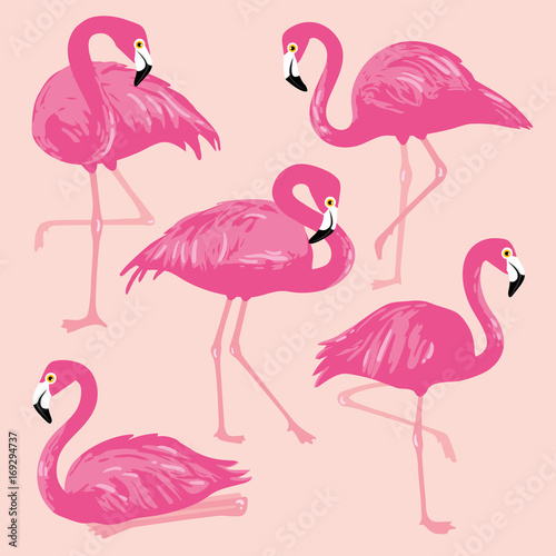 Foto op Aluminium Flamingo vogel Vector set with pink flamingos. Hand Drawn illustration