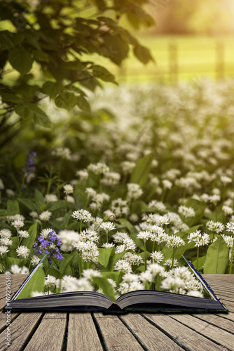 Fotobehang Zwavel geel Stunning conceptual fresh Spring landscape image of bluebell and wild garlic in forest in bright glowing sunlight concept coming out of pages in open book