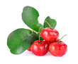 canvas print picture Barbados cherry on white background