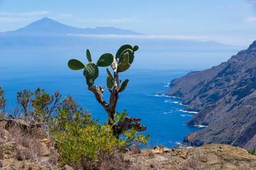 FototapetaKaktus mit Blick auf den Teide auf La Gomera