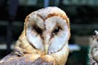 An image of a owl