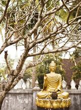 A Garden Of Buddhas Inside Wat...