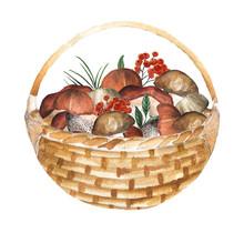 Basket Of Mushrooms. Watercolo...
