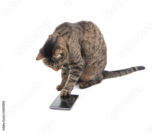Fotografie, Obraz  Brown tabby cat tapping on a smart phone screen with her paw, on white