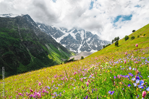 Photo Flowering alpine meadows in the Caucasus