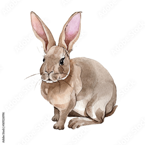 Rabbit wild animal in a watercolor style isolated. Full name of the animal: rabbit. Aquarelle wild animal for background, texture, wrapper pattern or tattoo.
