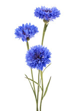 Blue Cornflower Herb Or Bachel...