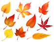 Autumn foliage of fall falling leaves vector icons