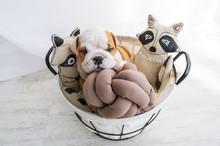 Puppy In A Basket