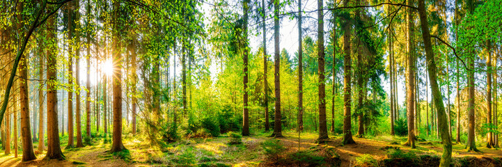 Panel Szklany Natura Wonderful forest panorama with bright sun