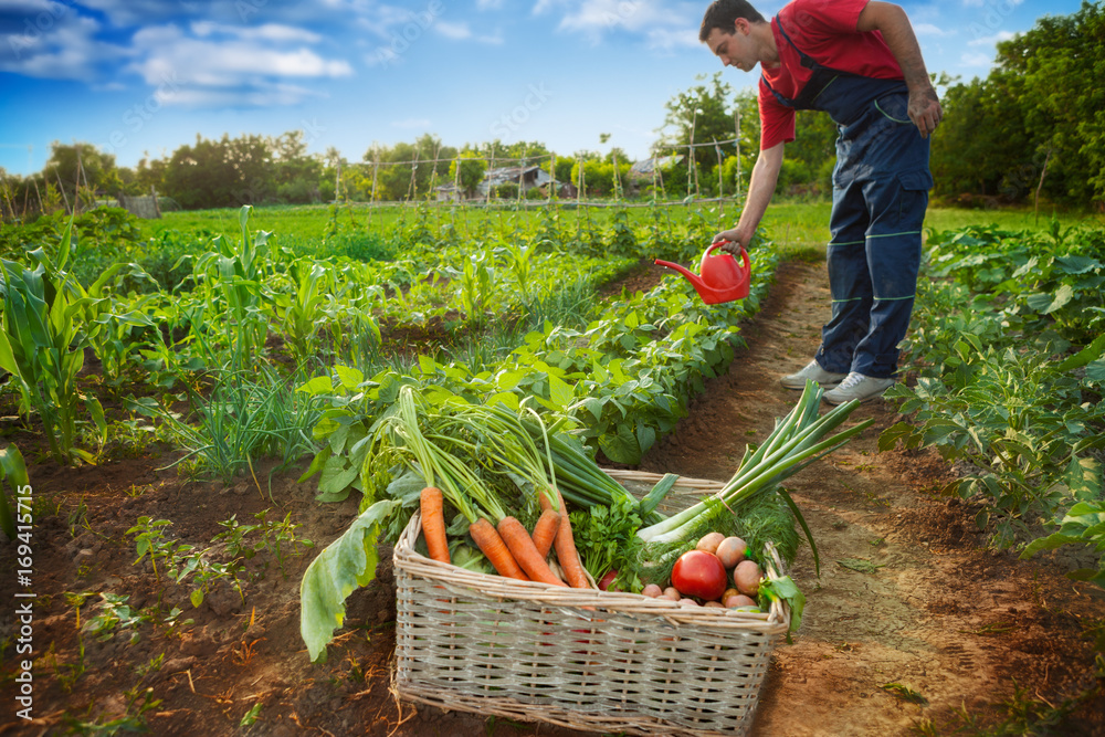 Fototapety, obrazy: Stack with vegetables and gardener watering garden