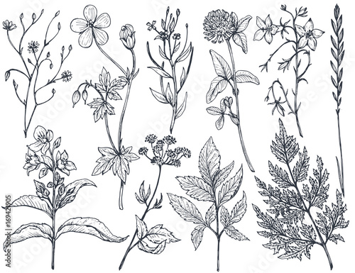 Foto  Hand drawn flowers and herbs vector set