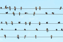 Musical Notes Performed By Birds On The Wires