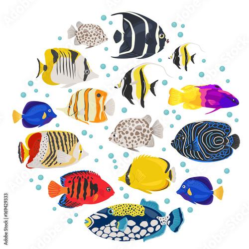 Freshwater aquarium fish breeds icon set flat style isolated on white Fototapeta