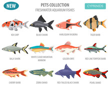 Freshwater Aquarium Fishes Bre...