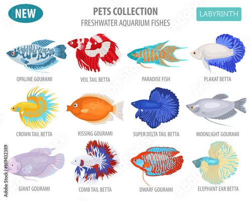 Freshwater aquarium fishes breeds icon set flat style isolated on white Canvas Print