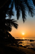 Beautiful sunset seascape with coconut palms silhouette