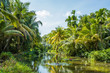 Lush tropical swamp in Sri Lanka. Water pond with water lillies and palms on the bank.