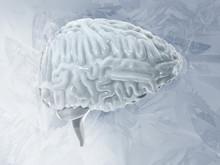 Frozen Brain Cryogenic Concept. Cerebellum. Human Brain Freeze 3D Illustration
