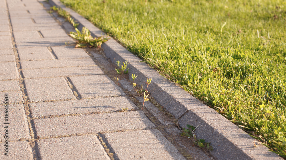 Fototapeta road and lawn divided by a concrete curb