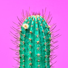 Panel Szklany Współczesny Cactus Fashion Design. Minimal fashion Stillife. Trendy Bright Colors. Green Neon Cactus Mood on Pink background