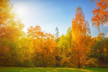 Fototapeta Inspiracje na jesień Autumn landscape