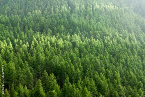 Foto auf Gartenposter Wald Alpine landscape