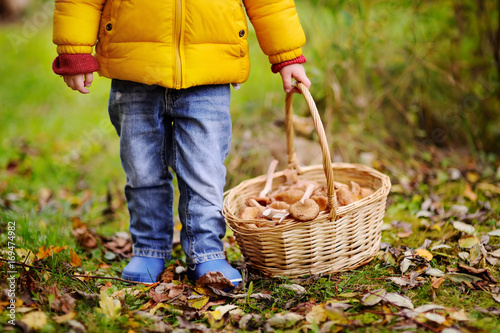 Fotografie, Obraz  Close-up photo of little boy picking mushroom in basket