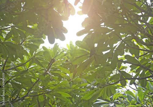 Photo  Leela Wadi leaf