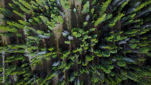Photo  Birds eye view of the forest