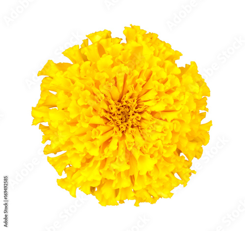 Pinturas sobre lienzo  Yellow marigold flower isolated on white background with clipping path