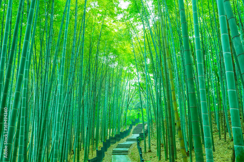 Foto op Plexiglas Bamboe bamboo