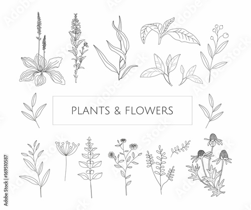 Photo  Vector  flowers and herbs on a white background