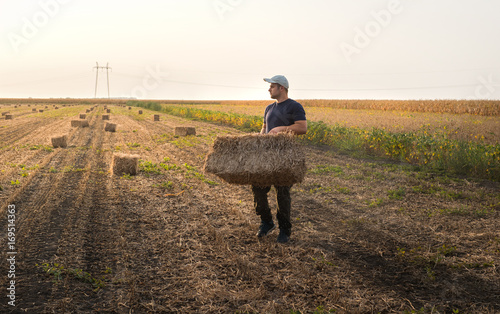 Young and strong farmer throw hay bales in a tractor trailer - bales of wheat Canvas Print