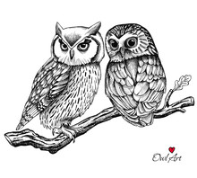 Image Of Two Owls On A Branch....