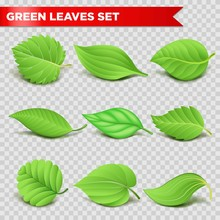 Green Leaf 3d Relaistic Icons Eco Environment Or Bio Ecology Vector Symbols