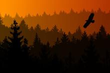 Vector Illustration Of Conifer...